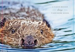 A clean beaver always finds more wood.